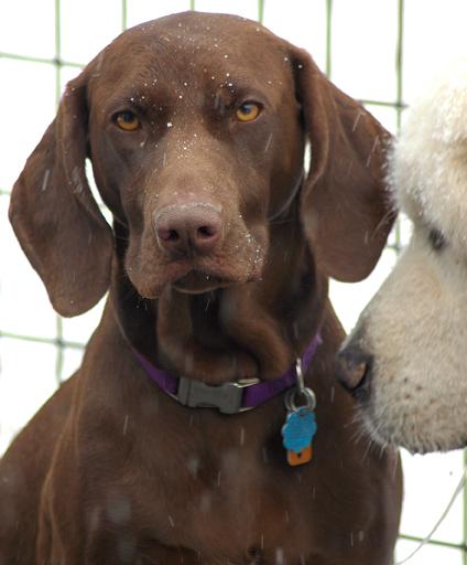 primrose lane farm pet boarding dog daycare